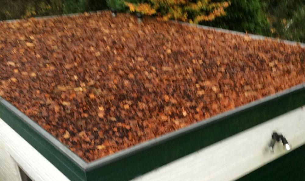 bladeren op dak
